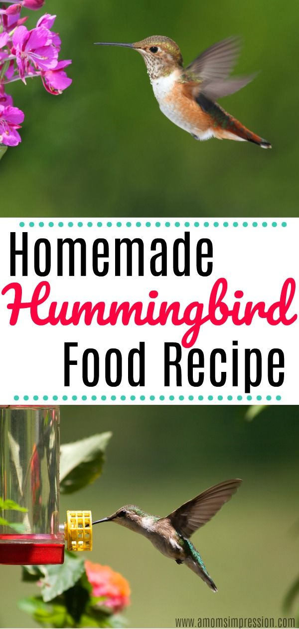 How To Make Diy Homemade Hummingbird Food This Recipe Is So