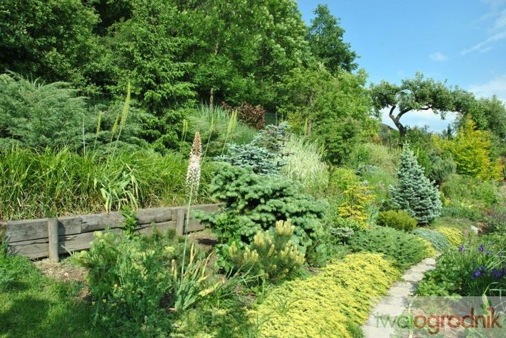 Ogród naturalnie łączy się z przylegającym lasem