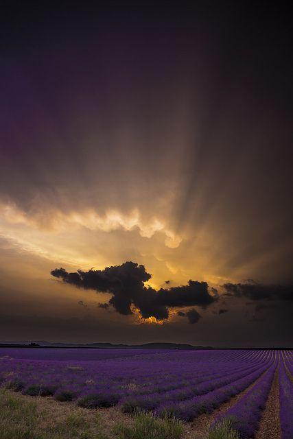 Lavender Sunset, Provence, France.