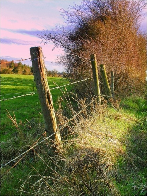 Best images about old fences on pinterest farm fence