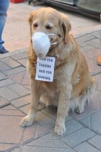 A dog wears a  medical mask and a sign that says Taksim is Everywhere, Resistance is Everywhere