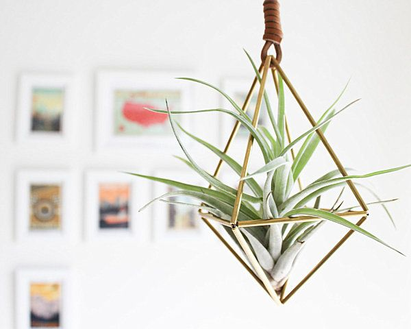 5 Unique Ways To Display Air Plants - Hey now.... I can make a wire cage for my tillandsias!