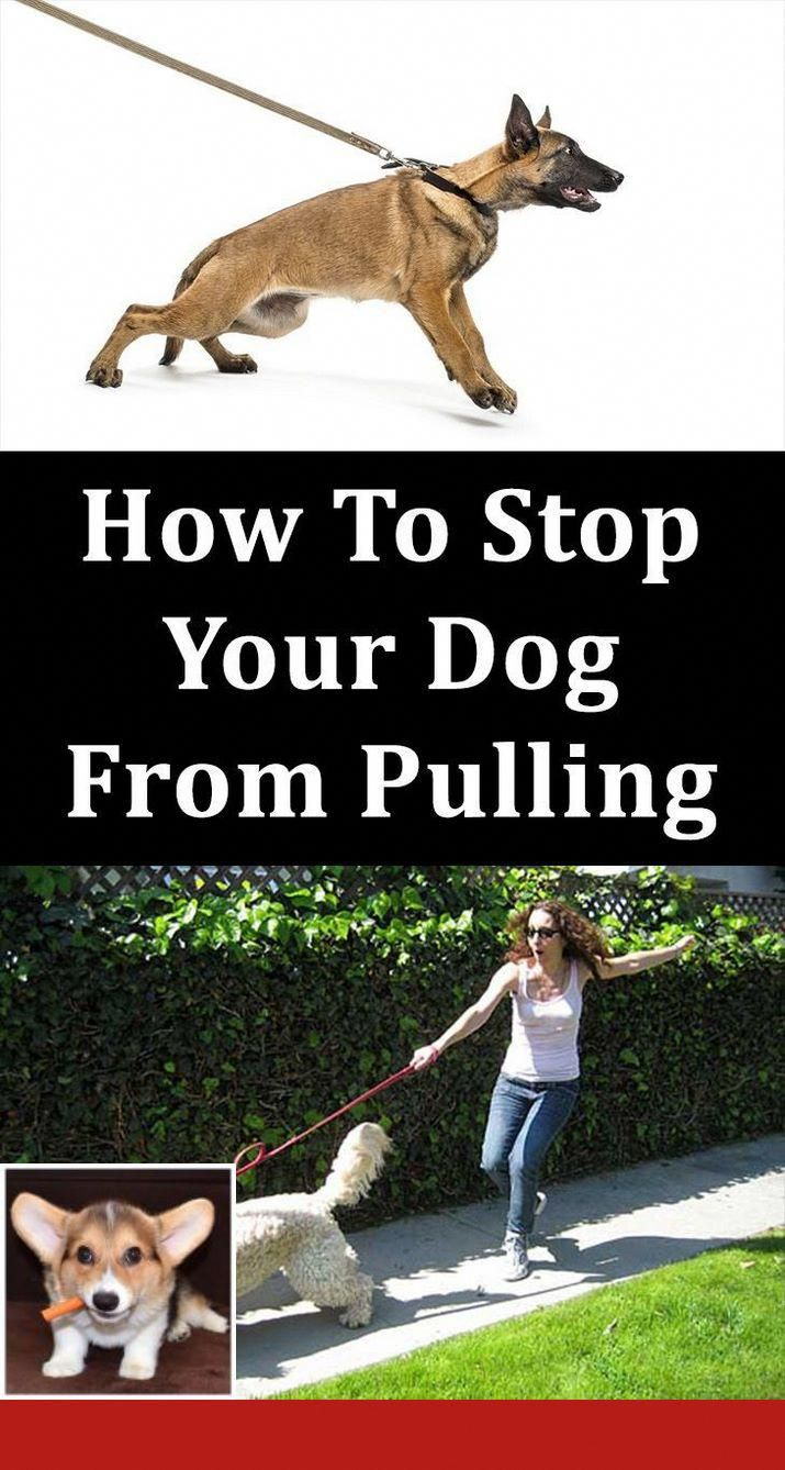 Teach Your Dog Commands In German Dog Solution Dog Training