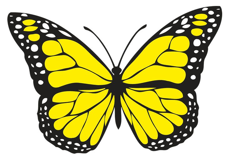 spiritual meaning of yellow butterflies. Hope and guidance