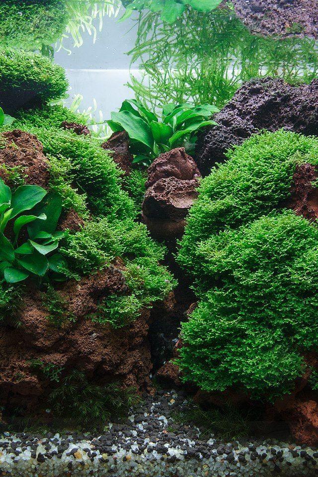 891 best images about aquarium fish tank aquascape for Fish aquarium rocks