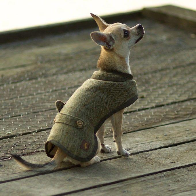 ... Luxury Tweed Waterproof Dog Coat ...