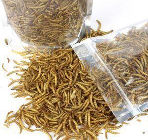 Dried Mealworms for Aquarium Fish Feed Reptile Turtle Hamster Wild Bird Pet Food Feeding