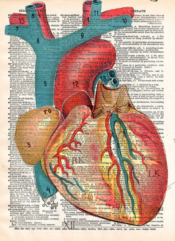 A colourful scientific diagram of an anatomical heart is depicted in full colour or black and white on a page from a vintage book.