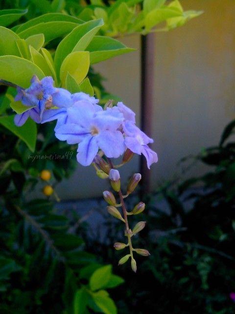 Fresh morning flower