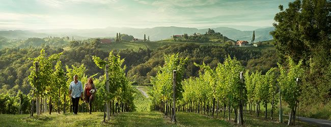 Graz's Wine Region - Vineyards and castles dominate the landscape to the south and the west of Graz. An area rich in tradition, it is a favorite get-away for the people of Graz, who welcome any excuse for a culinary excursion into the wine region. Vineyards in Southern Styria © Österreich Werbung / Peter Burgstaller