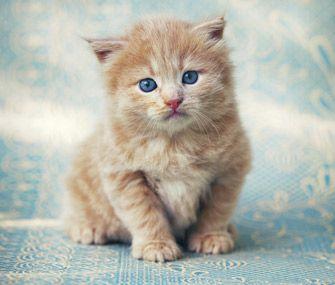 Most Popular Kitten Names 2013
