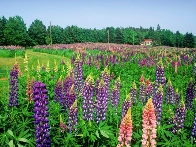17 Best Images About Flowers On Pinterest Delphiniums Texas Bluebonnets And Botanical Gardens