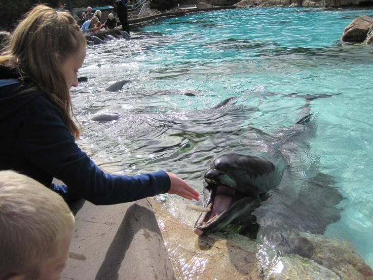 Feeding her favorite animal!