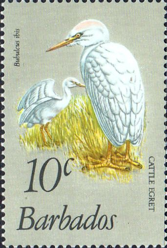 Barbados 1979 Birds SG 626 Fine Mint SG 626 Scott 499 Other West Indies Stamps HERE