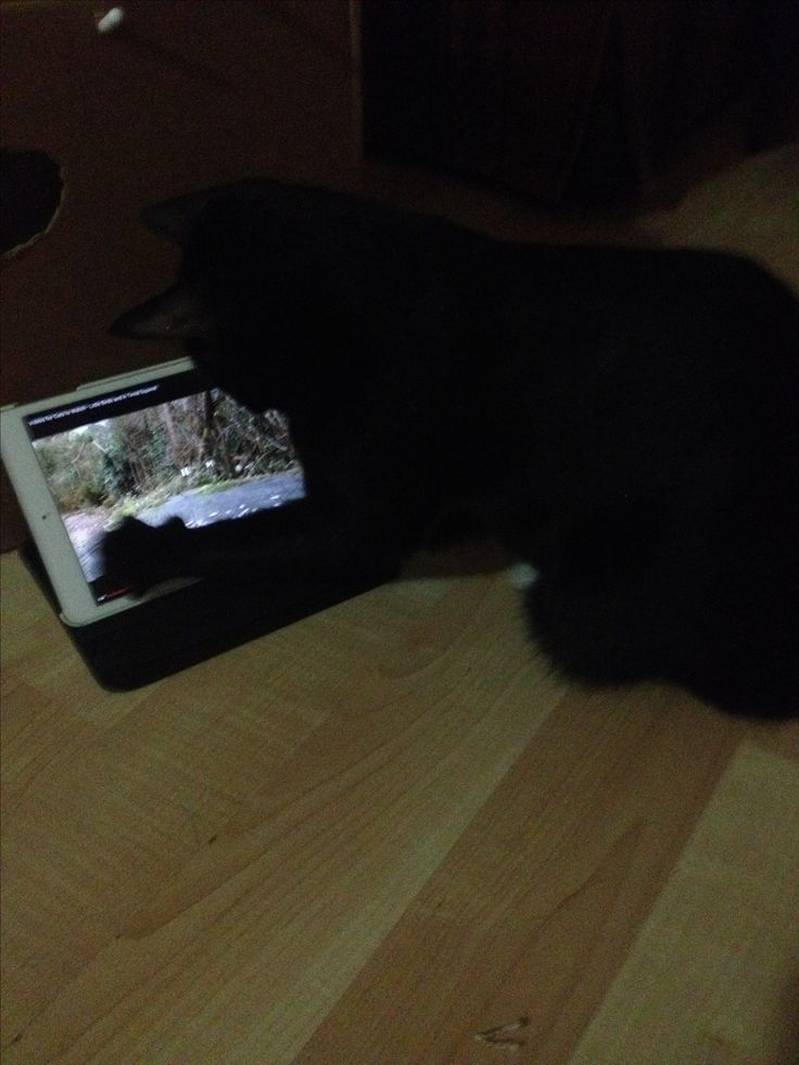 Technology has consumed us all #blackcat #technology