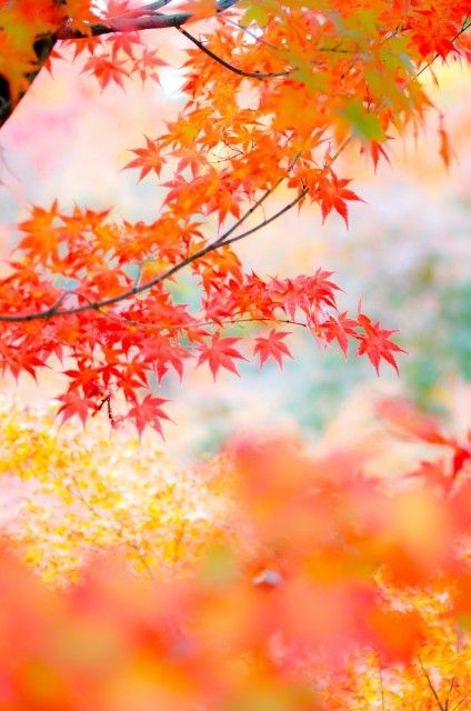 Light fall colors on the leaves.