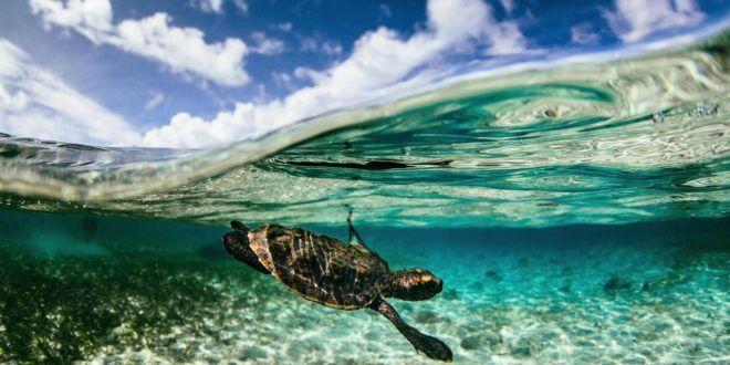 Inilah 10 Gambar Pemandangan Bawah Laut Yang Menakjubkan Pesona