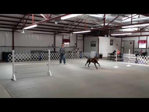 North Texas Dfw Denton Dallas Fort Worth Cmc Dog
