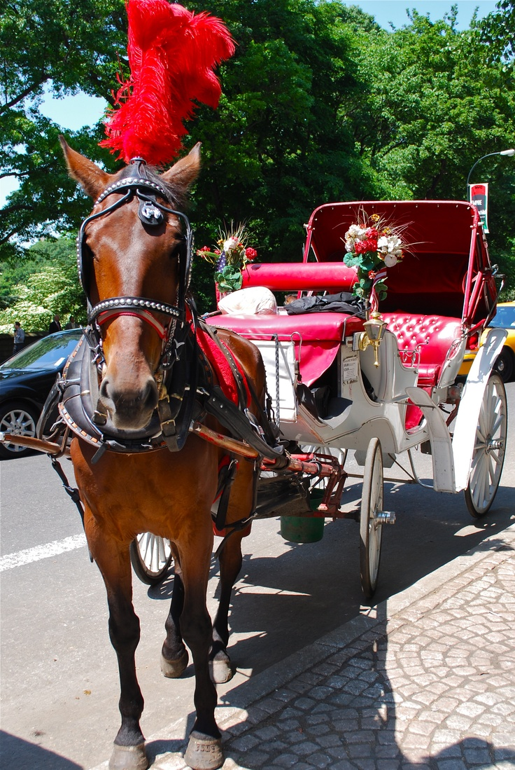 Central Park - horse & buggy ready to go