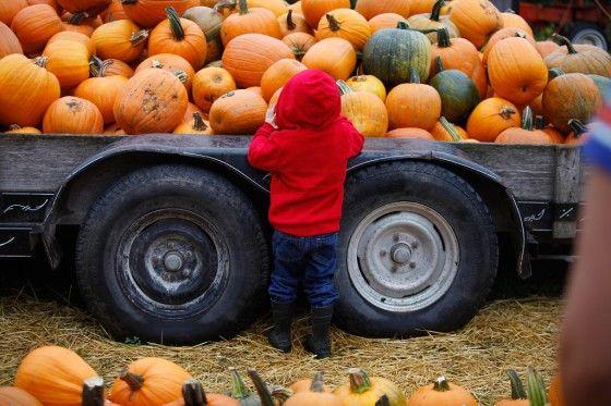Hartsburg Pumpkin Festival - Vox Magazine