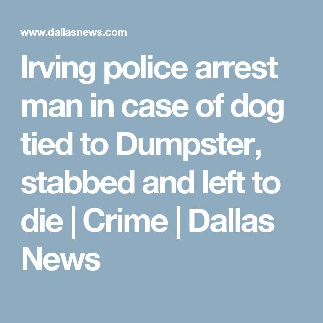 Irving police arrest man in case of dog tied to Dumpster, stabbed and left to die | Crime | Dallas News