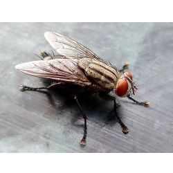 My house has always been clean, except for the dozens of flies that had somehow invaded it! Getting rid of the flies was my number one priority.  My...