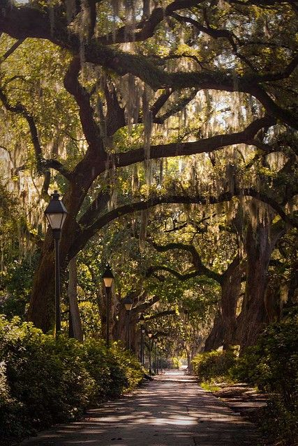 down south...spanish moss