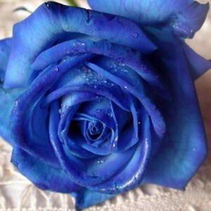 Γιά όμορφα μυρωδάτα τριαντάφυλλα | MeaColpa 4 beautiful, fragrant roses