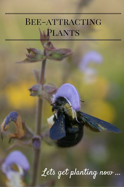 A Green and Rosie Life: Weekly Green Tips - 7 Best bee attracting plants