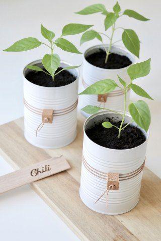 DIY potteskjuler: upcycling af brugte dåser til fine potter –
