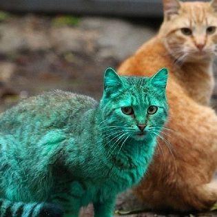 動画は「YouTube」より  前代未聞、鮮やかな緑色の毛を持つネコが発見されたとして海外メディアが沸いている。英紙「The Daily Mail」が今月4日に報じたところによると、この衝撃的な毛色のネコはブルガリア北東部、黒海に面したリゾート地であるヴァルナという街に出現した。  ネコを発見した街…