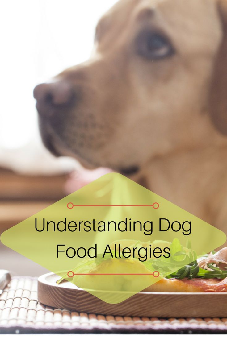 If your dog is itching and scratching all the time, there is a 1 in 5 chance that the cause is dietary. Find out more about dog food allergies here!