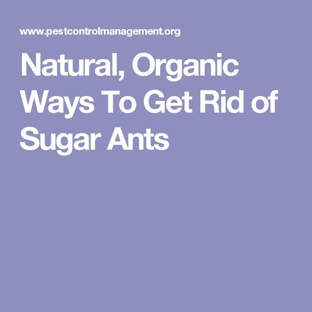 15 Must-see Sugar Ants Pins