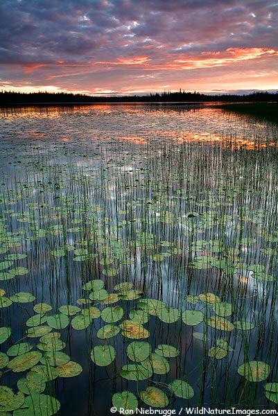 ✯ Sunset at Deadman Lake - Tetlin National Wildlife Refuge, Alaska