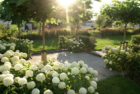 17 beste afbeeldingen over beplanting op pinterest tuinen schaduwplanten en zoeken. Black Bedroom Furniture Sets. Home Design Ideas