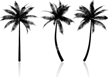 Palm tree silhouettes