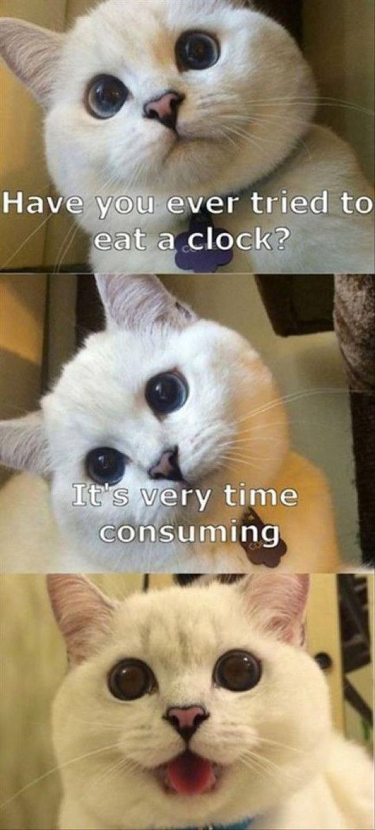 Funny Cat - 45 Pictures