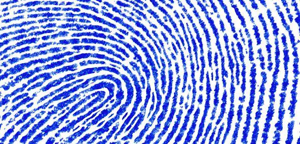 scinexx | Fingerabdruck verrät Kokain-Konsum: Stoffwechselprodukte der Droge ermöglichen einfachen und schnellen Drogentest - Kokain, Drogentest, Fingerabdruck - Kokain, Drogentest, Fingerabdruck, Forensik, forensische Analytik