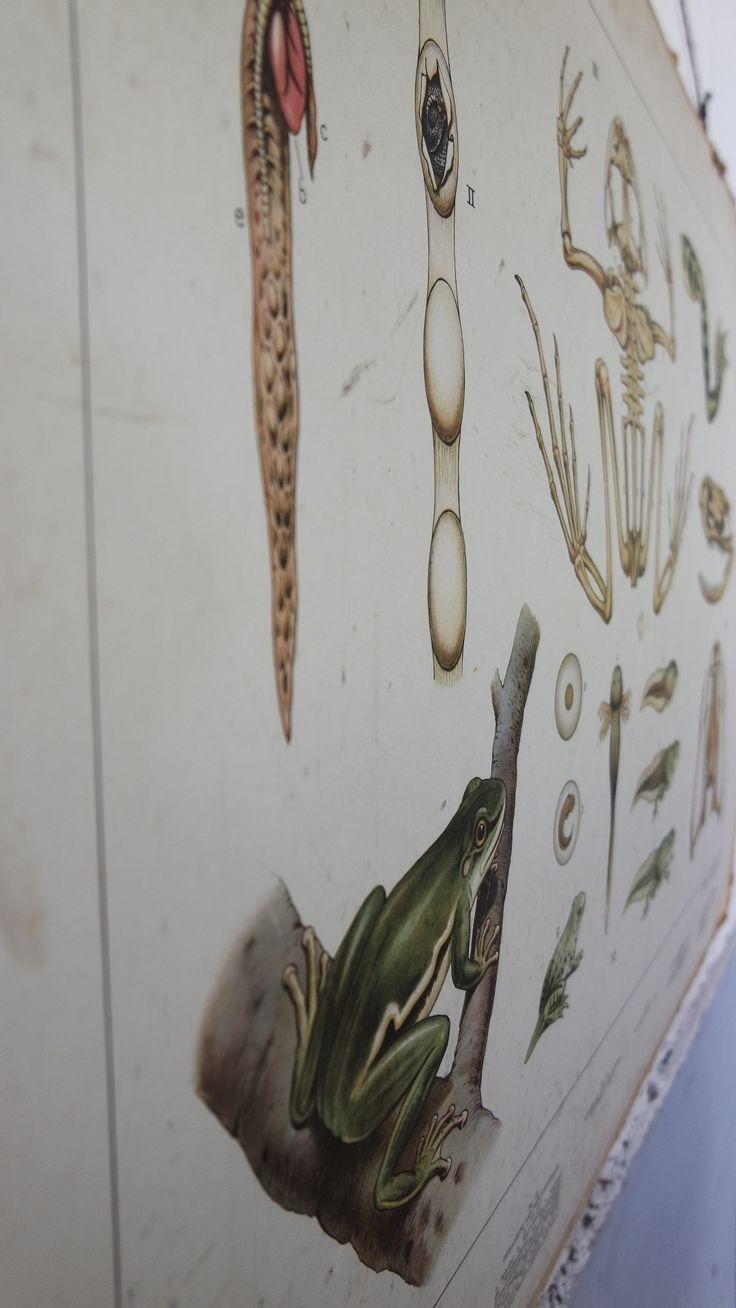 """Schoolposter """" bij de sloot """"  #poster #vintageschoolposter #vintagedecoratie"""
