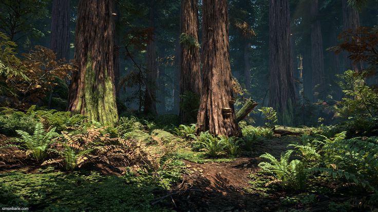 ArtStation - Redwood Forest UE4, Simon Barle