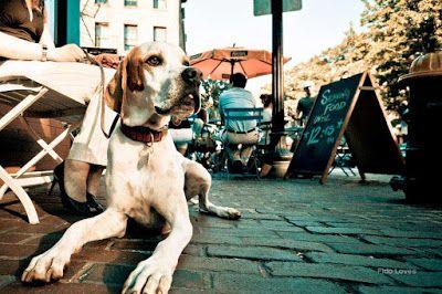 10 regras da etiqueta dog friendly http://ift.tt/2pEohhv