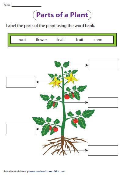 Parts Of A Plant For Kindergarten Worksheet