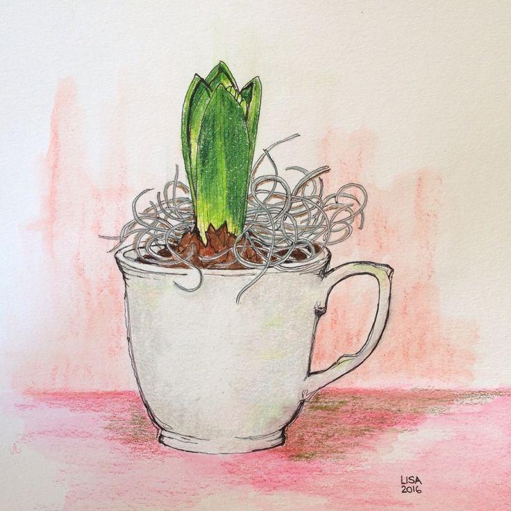 Hyacinth bulb in a teacup Prismacolor premier pencils
