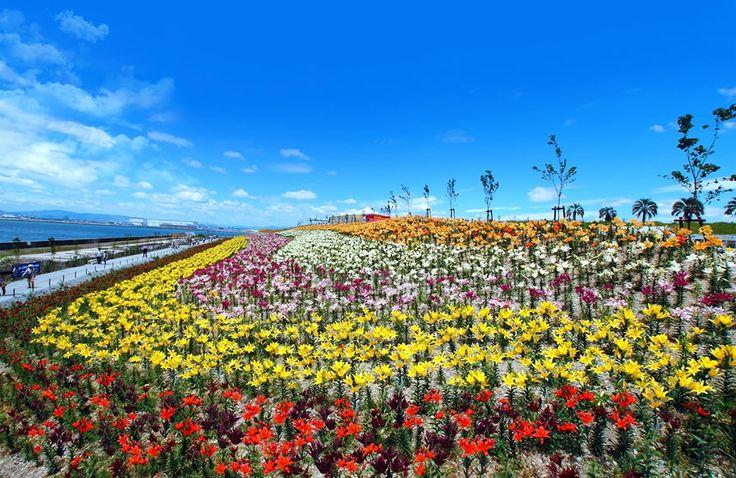 ホテル大阪ベイタワーと大阪舞洲ゆり園 タイアップキャンペーン