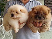 Le razze canine più belle al mondo, (la numero 8 è un amore) Scopri le foto