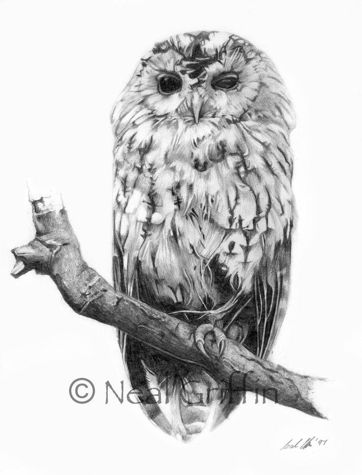 d277879015-Originals-Pencil_draw_big-Tawny Owl copy.jpg (2065×2708)