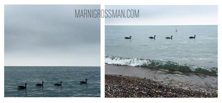 Toronto. #marnigrossman #marnigrossmanphotography #marnigrossmantoronto