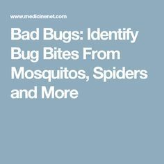 Bad Bugs: Identify Bug Bites From Mosquitos, Spiders and More