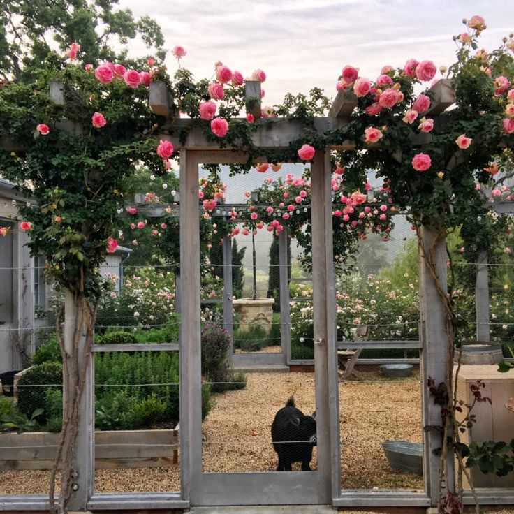Patina Farm: Eden Roses by the Goat Garden