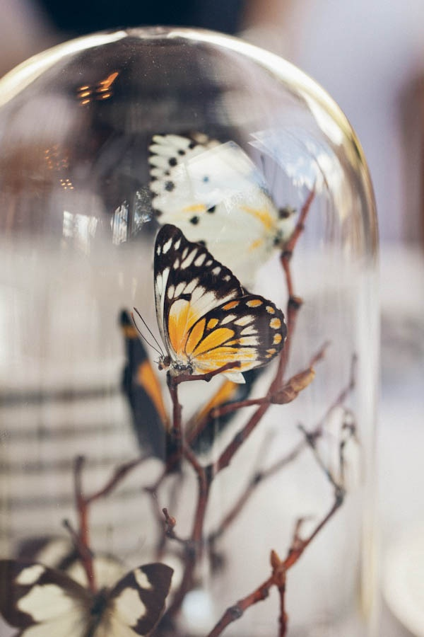 55 best viavtwonen my butterfly images on pinterest